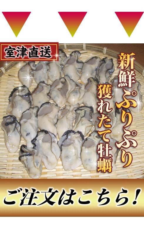 室津牡蠣の直送、販売は幸永丸水産
